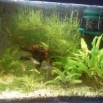 Mein Aquarium von vorne